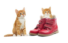 Kitten And The Shoes