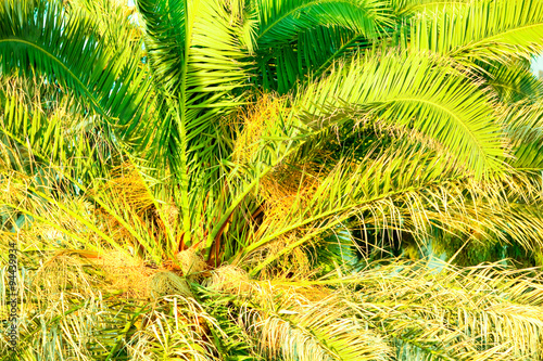 Palm Tree Filled Frame In Warm Afternoon Light - Buy this stock