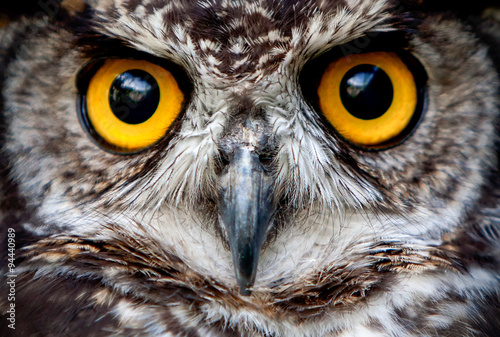 owl eye wildlife bird prey macro night face nature great up owls are the order s Canvas Print