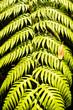 Leaf Background Texture Pattern