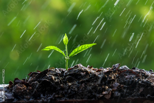 Green sprouts in the rain Fototapet