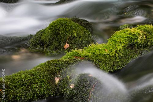 Foto auf Gartenposter Forest river stream in the forest