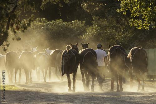 Fotografie, Obraz  Caballo equino deporte