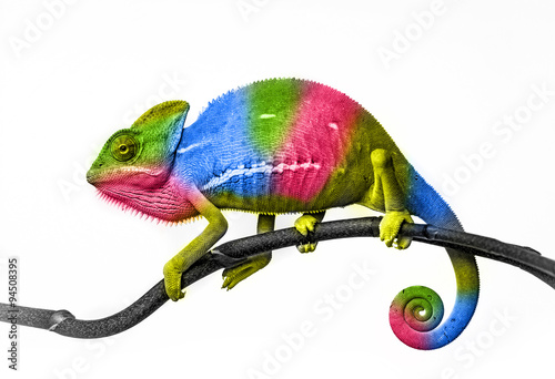 Photo sur Aluminium Cameleon chameleon - colors