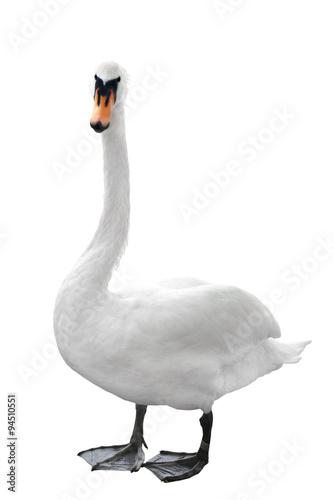 Stickers pour portes Cygne Swan