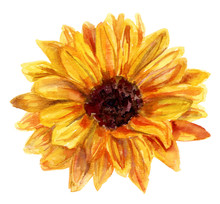 Watercolor Sunflower Drawing O...