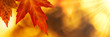 canvas print picture - Autumn maple leaf