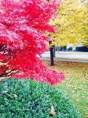 Herbst in drei Farben
