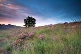 kwitnący wrzos na wzgórzu o wschodzie słońca - 94582716