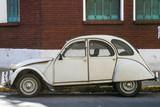 Beetle - 94585142