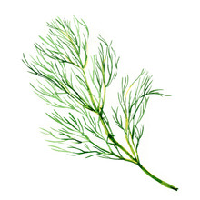 Green Dill Isolated On White B...