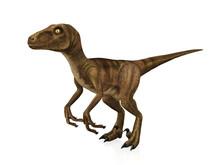3D Model Velociraptor Isolated...