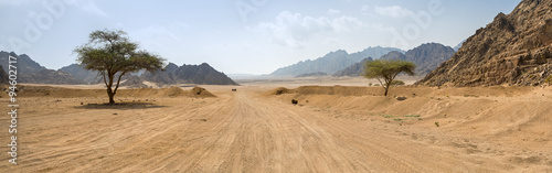 Poster Droogte road and two trees in desert in Egypt