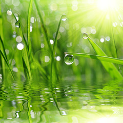 Fototapeta Optyczne powiększenie Fresh green grass with dew drop closeup. Nature Background