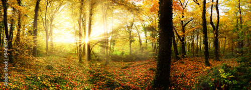 In de dag Honing Autumn forest with sun rays