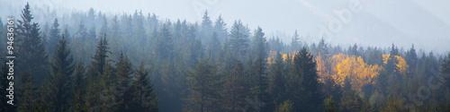 panoramiczne ujęcie tajemniczego mglistego lasu sosnowego z żółtą plamą