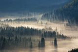 świerki w dół wzgórza do lasu iglastego we mgle o wschodzie słońca - 94651188