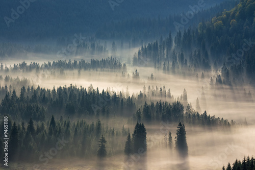 Poster Bossen spruce trees down the hill to coniferous forest in fog at sunrise