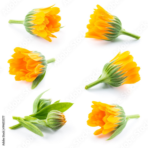 Fotografía Calendula. Marigold flowers and buds isolated on white. Collecti