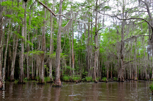 Fotografie, Obraz  Louisiana Bayou, marshy swamp lands