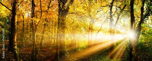 Canvas Prints Honey Autumn forest with sun rays