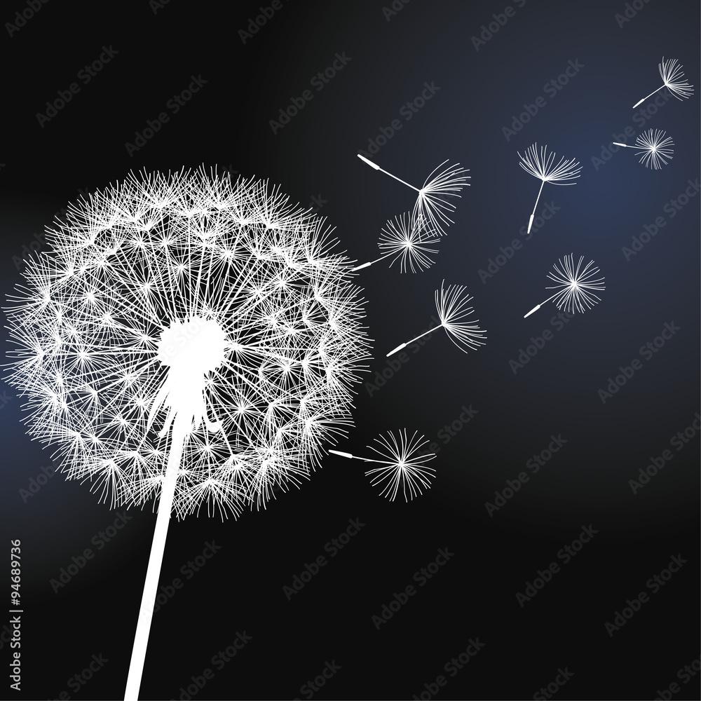 Fototapety, obrazy: Flower dandelion on black background