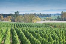 Tree Farm Landscape