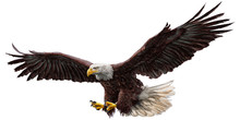 Bald Eagle Flying Draw And Pai...
