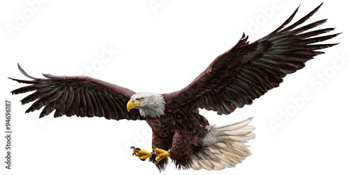Fotografie, Tablou  Bald eagle flying draw and paint on white background vector illustration