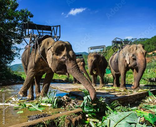 the farm of elephants not far from Dalat Canvas Print