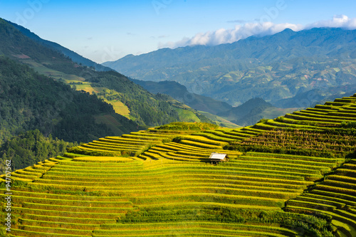 Aluminium Prints Rice fields Terraced rice fields of ethnic people in Mu Cang Chai district of Lao Cai province, Vietnam. It is world cultural heritage in Vietnam.