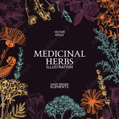 Vector design with hand sketched herbs Canvas Print