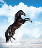 Fototapeta Konie - reared horse