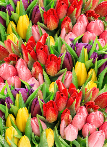 Fototapety, obrazy: Spring tulips. Bouquet of fresh flowers with water drops