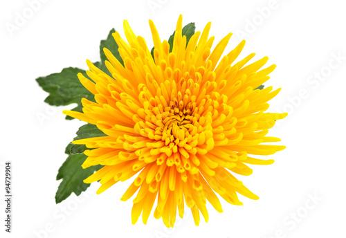Fotografia Yellow autumn chrysanthemum