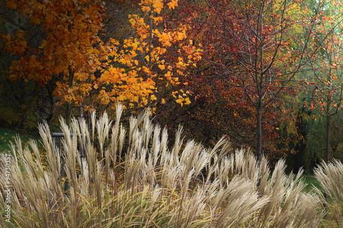 Jesienią w Parku  - 94730357