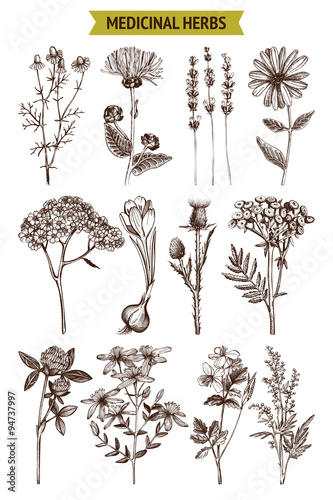 Photo  Vector collection of hand drawn spices and herbs