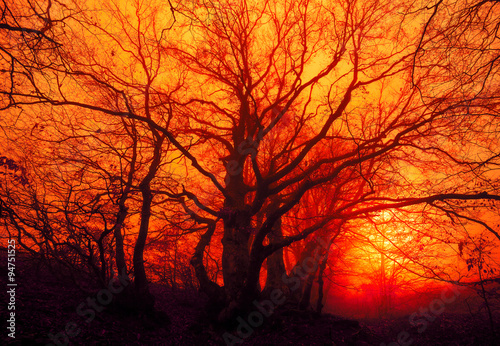 Foto op Aluminium Rood autumn landscape, trees in the mist at dawn