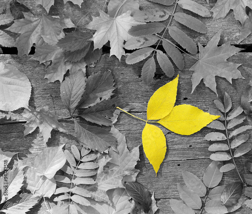 zolty-lisc-wsrod-czarno-bialych-lisci-jesienia