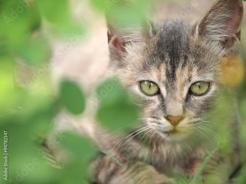 Fotografia, Obraz  茂みからのぞく猫