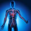 canvas print picture - Mensch mit Blutkreislauf