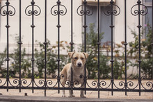 Exiled Dog