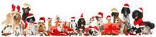 Haustiere Feiern Weihnachten