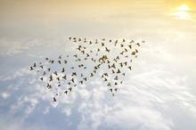 Birds On Sky , Growth Developm...