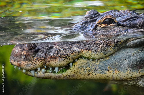 Spoed Foto op Canvas Krokodil Amphibian Prehistoric Crocodile