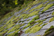 Moss On Roof Tiles