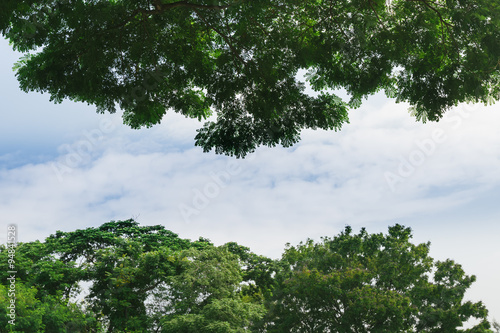 Carta da parati  Big Trees with Blue Sky