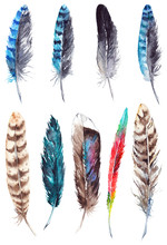 Watercolor Colorful Feather Set Isolated