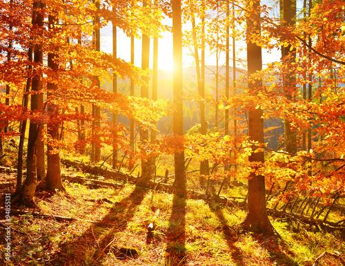 Autocollant pour porte Orange eclat Autumn wood