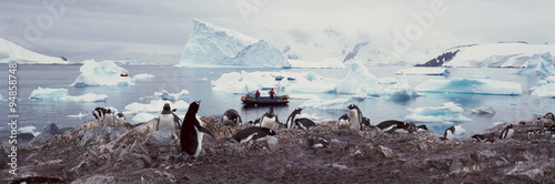 Panoramic view of Gentoo penguins with chicks (Pygoscelis papua), ecological tourists in inflatable Zodiac boat with glaciers and icebergs in Paradise Harbor, Antarctica